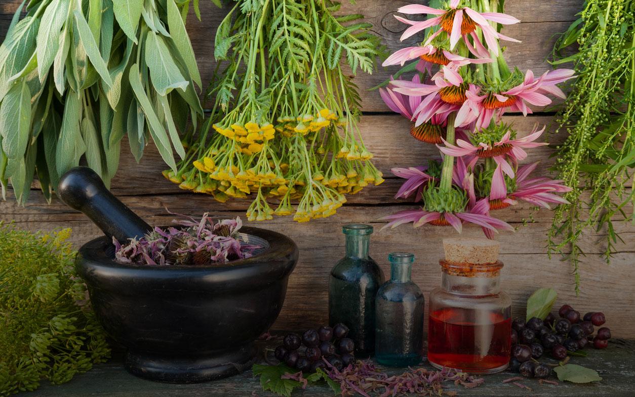 La importancia de la fitoterapia y plantas medicinales en atención primaria de la salud
